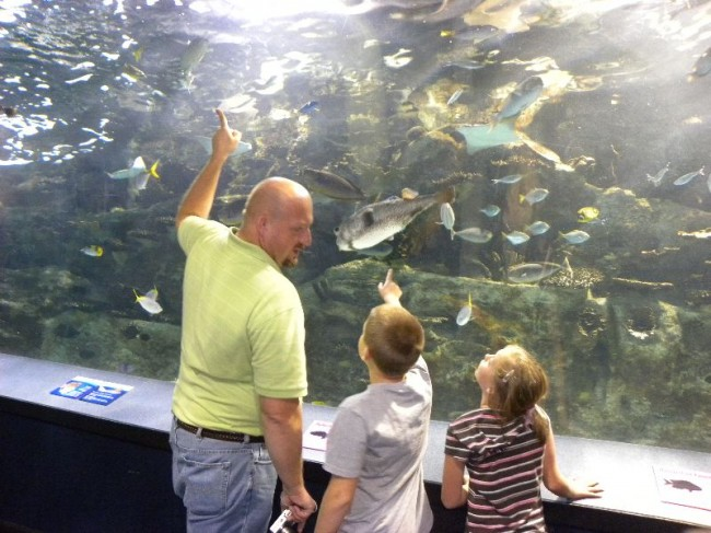 Tips to visiting aquariums
