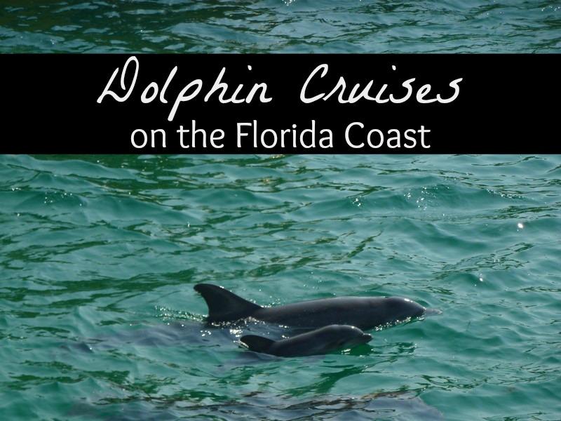 Dolphin Cruises on the Florida Coast