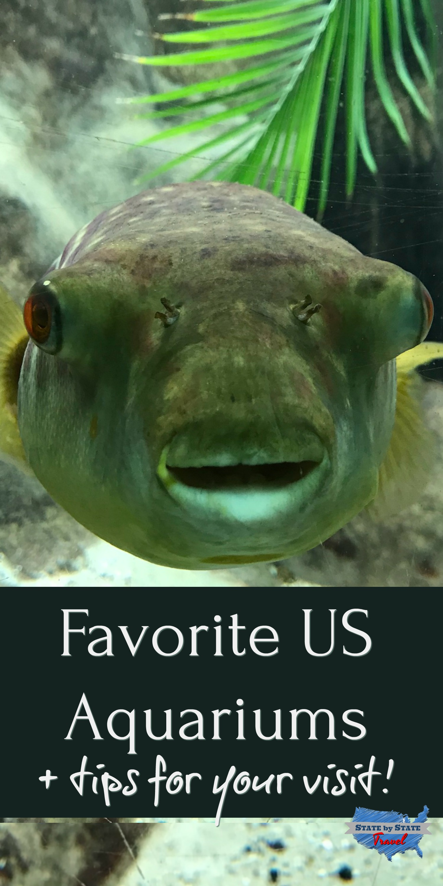 Favorite U.S. Aquariums