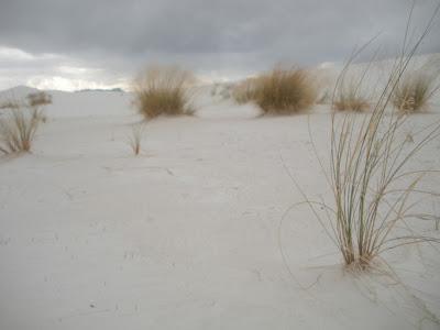 New Mexico sand dunes