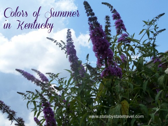 Colors of Summer in Kentucky