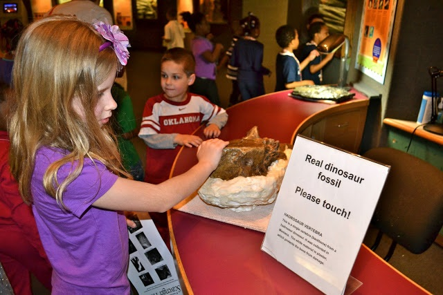 Delaware Museum of Natural History:  10 Museums Worth Visiting On Museum Day Live! | State By State Travel