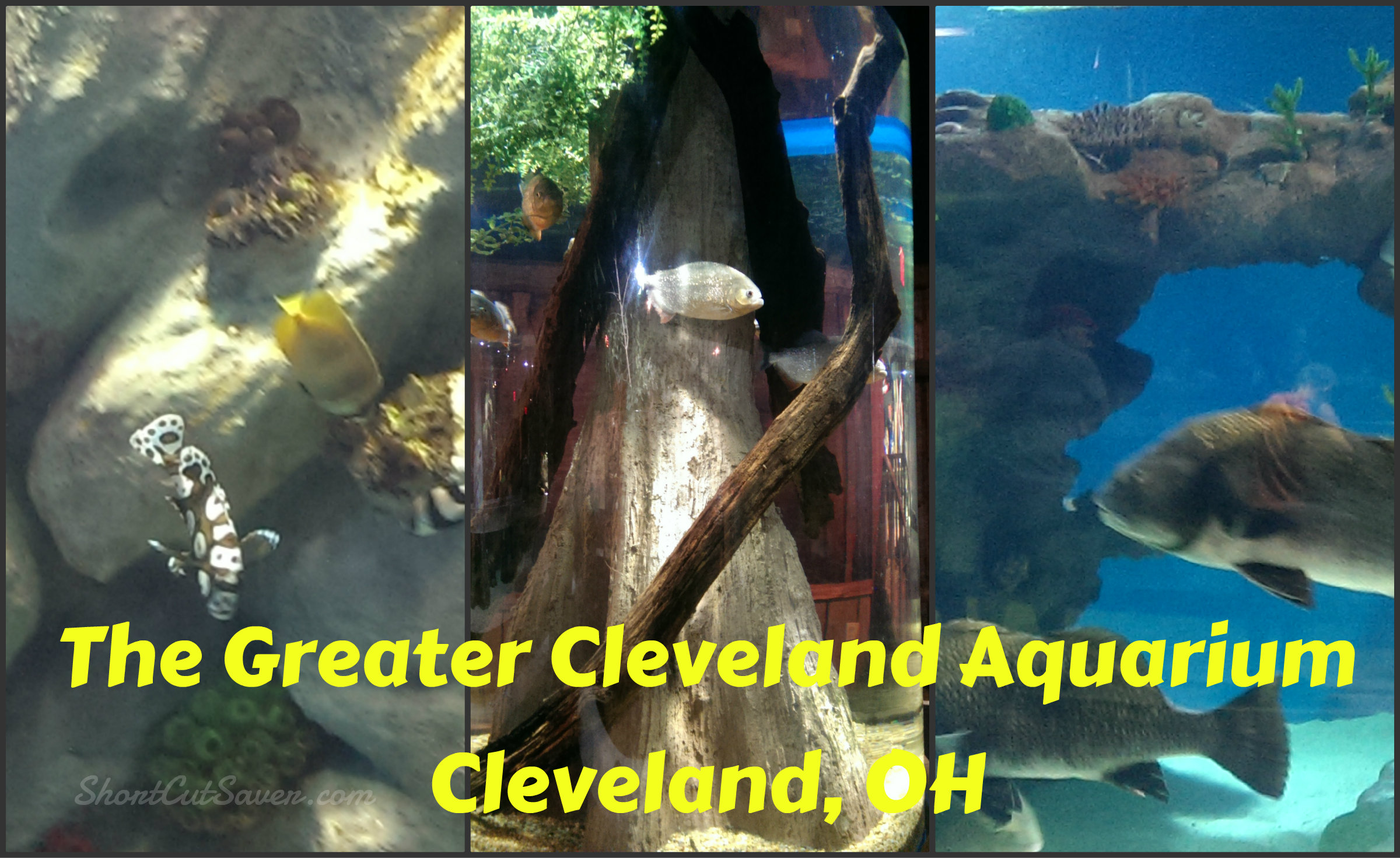 Greater Cleveland Aquarium: 10 Of Our Favorite Things To Do In Ohio | State By State Travel
