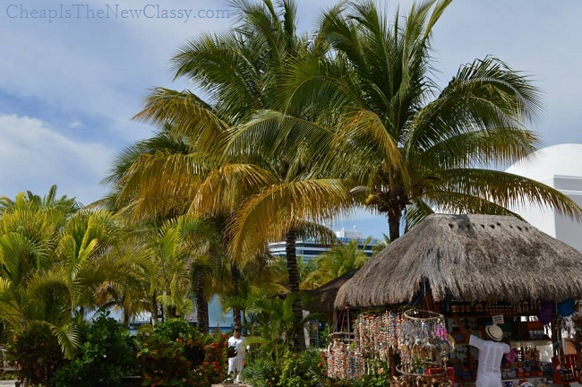 Mexican Plants: Flowers, Shrubs and Trees In Cozumel
