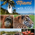 12 Things To Do In Miami With Kids