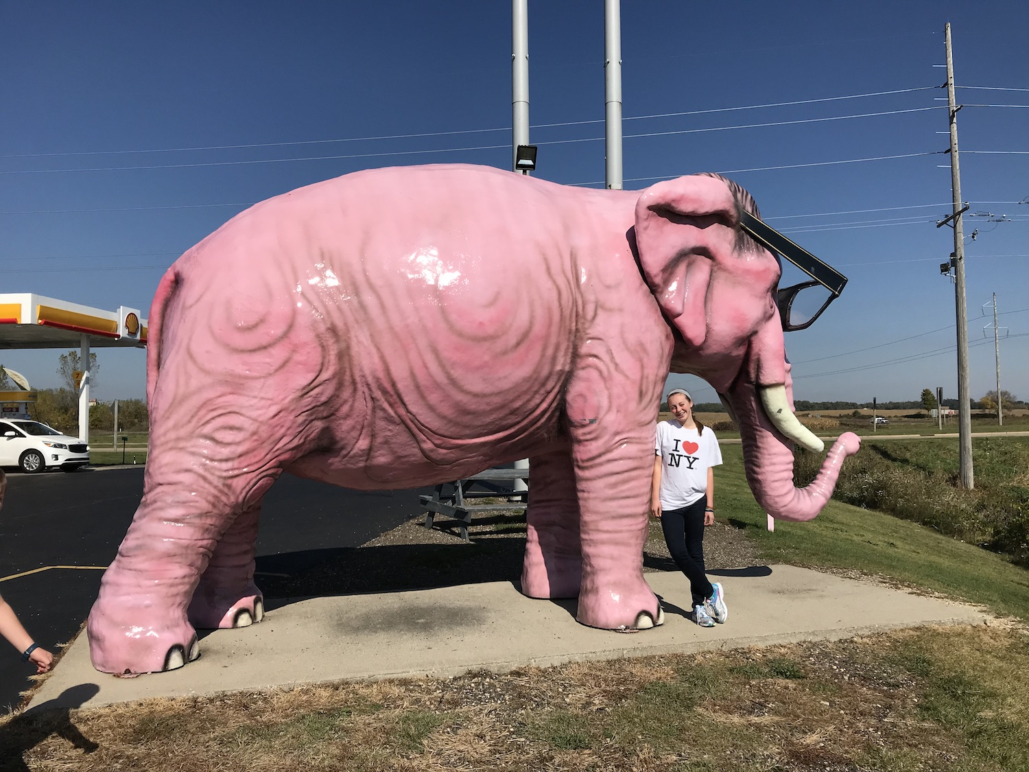 Giant Pink Elephant Deforest Wisconsin