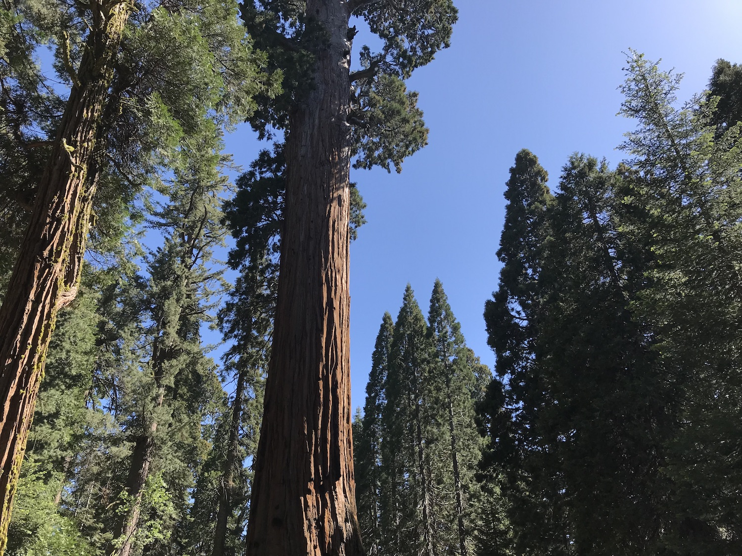 General Grant Tree & Kings Canyon National Park